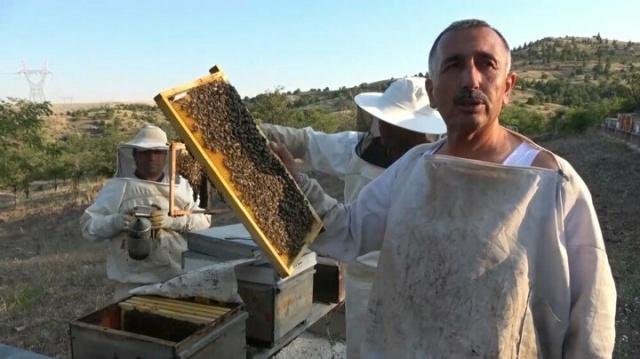 Lavanta balı yeni gelir kapısı oldu: Kilosu 150 lira