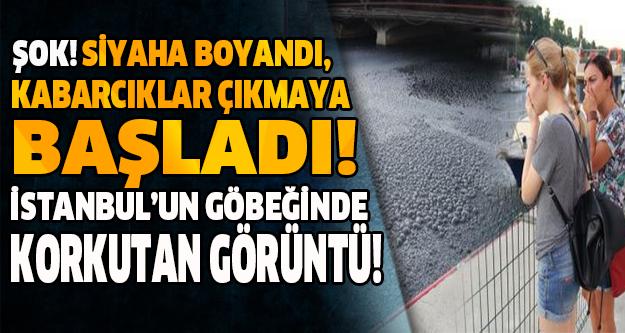 ŞOK! SİYAHA BOYANDI, KABARCIKLAR ÇIKMAYA BAŞLADI! İSTANBUL'UN GÖBEĞİNDE KORKUTAN GÖRÜNTÜ!
