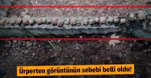 Isparta'da mezarlıktaki kaplumbağaların sırrı çözüldü
