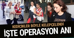 Kedicikler böyle kelepçelendi! İşte operasyon anı...