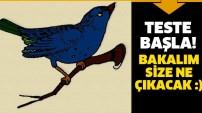 Mavi kuş testi! (İlginç bir kişilik testi) Teste başla! Bakalım size ne çıkacak!