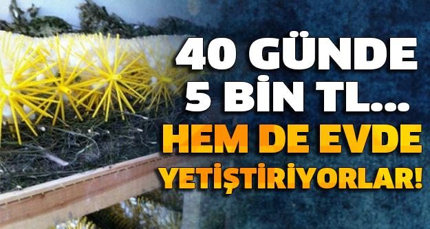 40 GÜNDE 5 BİN TL KAZANIYORLAR...