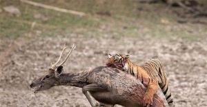 Hayvanlar dünyasında vahşi kareler!