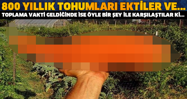 TOPLAMA ZAMANI GELDİĞİNDE ÖYLE BİR ŞEY İLE KARŞILAŞTILAR Kİ... 800 YILLIK TOHUMLARI EKTİLER VE...