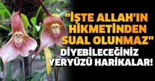 """""""İŞTE ALLAH'IN HİKMETİNDEN SUAL OLUNMAZ"""" DİYEBİLECEĞİNİZ YERYÜZÜ HARİKALAR!"""