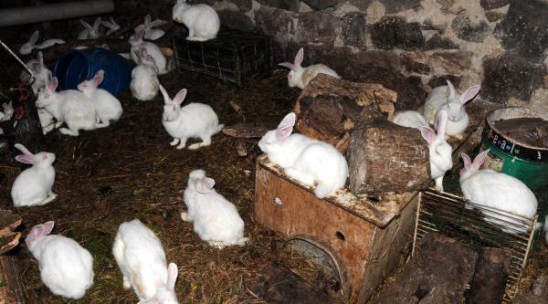 100'Den Fazla Tavşani Var