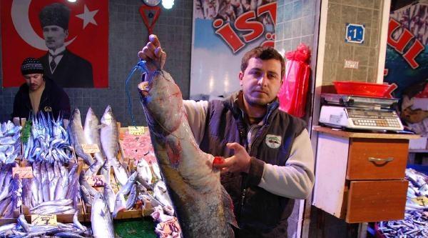 12 Kiloluk Yayın Balığı Yakaladı