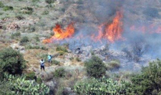Bodrum'da çıkan yangın lüks villalara kadar ilerledi