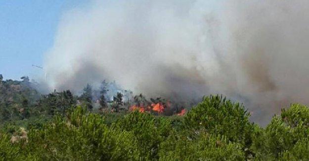 Kırkağaç'ta 10 hektar orman kül oldu