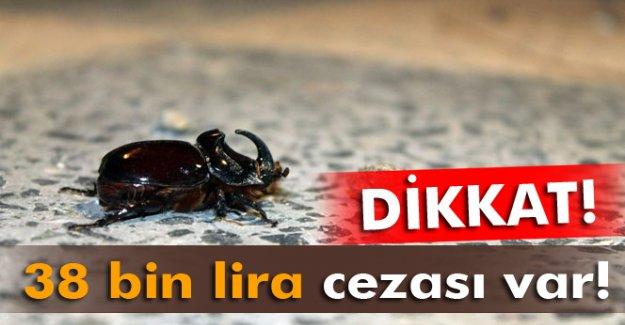 Orman ve Su İşleri Bakanlığı'ndan gergedan böceği açıklaması