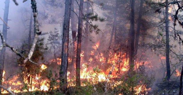 Karabük'te büyük orman yangını!