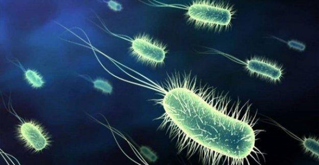 Bakteriler birbirleriyle 'konuşuyor'!