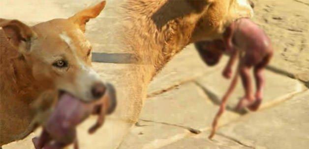 Sokak köpeği yeni doğan bebeğin hayatını kurtardı