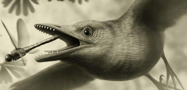 25 milyon yıllık bir kuş fosili bulundu