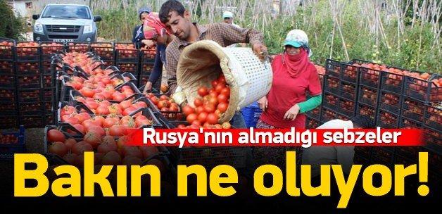 Rusya'nın almadığı sebzeler bakın ne oluyor!
