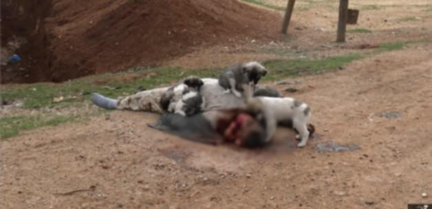 Işid öldürdüğü insanları köpeklere yedirdi!