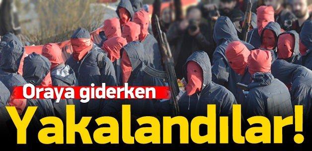 Kobani'ye geçeceklerdi: Yolda yakalandılar!