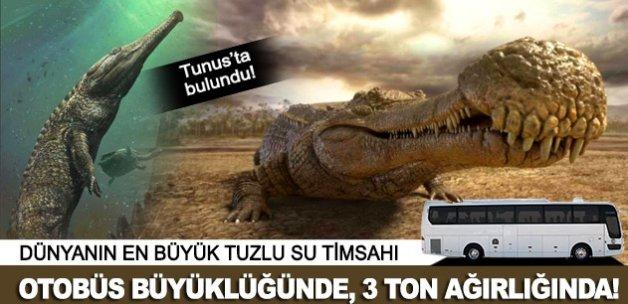 Otobüs büyüklüğünde timsah fosili bulundu