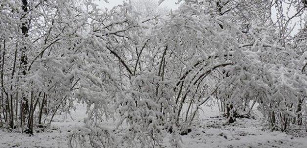 'Mart karı' fındık üreticilerini endişelendirdi