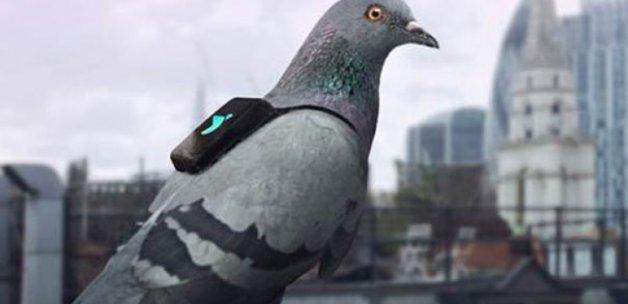 Yelekli güvercinler hava kirliliğini tweet atıyor!