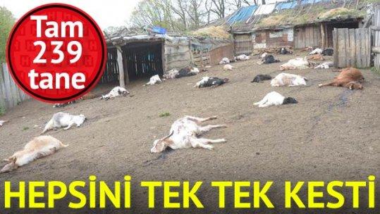 Babası ile tartıştı, 239 keçiyi telef etti