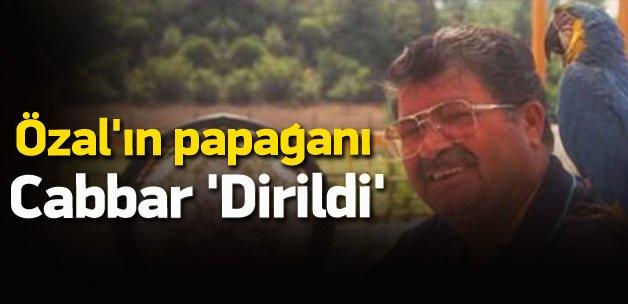 Turgut Özal'ın papağanı Cabbar 'dirildi'