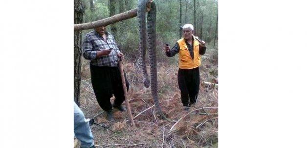 4 metrelik yılan şaşırttı
