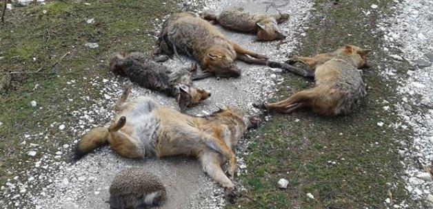 Toplu hayvan ölümlerinde şaşırtan rapor