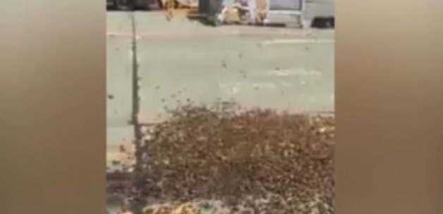 Arı sürüsü Kraliyet Hava Kuvvetleri'ni istila etti