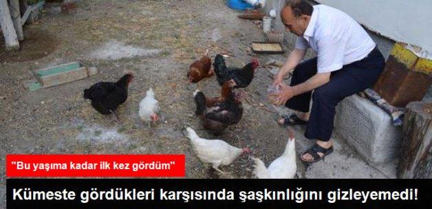 Beslediği Tavuklarından Biri
