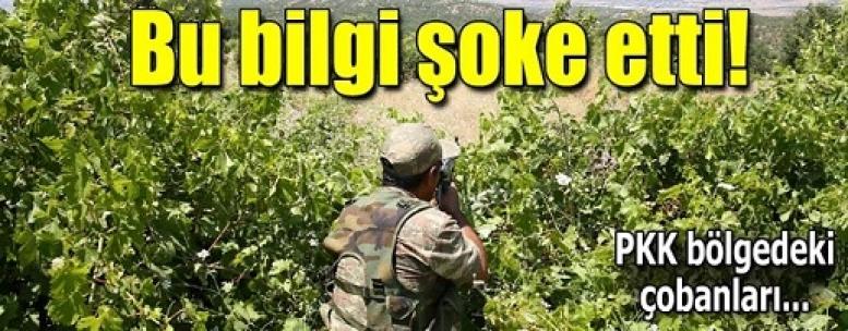 """PKK'nın finans kaynağı """"kenevir tarlaları""""na operasyon"""