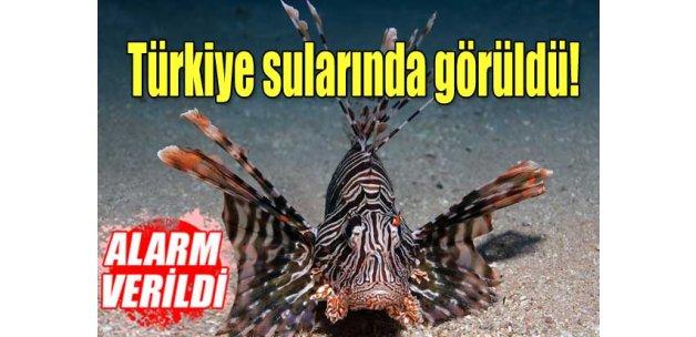 Türkiye sularında 'aslanbalığı' alarmı