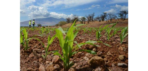 110 Nobel'li bilimci: Açlığa karşı GDO'lu gıdaya izin verin