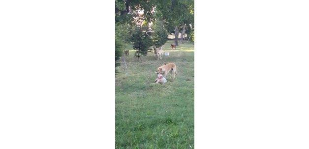 Bursa'da dehşet: Köpekler bir anda parçaladı!