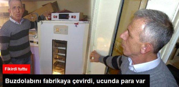 Buzdolabında Civciv Üretiyor