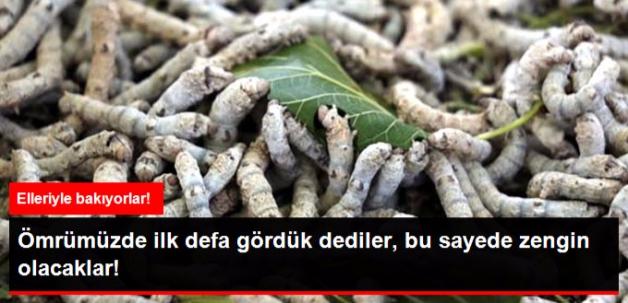 Devlet Destek Oldu, 2 Ev Kadını İpek Böceği