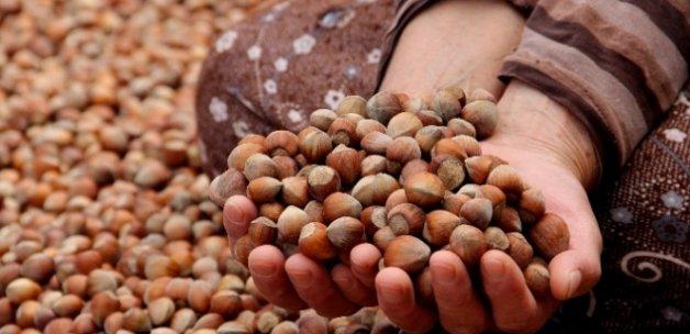 Fındık ihracatı 2 milyar doları aştı