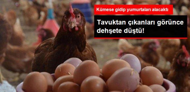 Kuyruklu Yumurta Hayrete Düşürdü