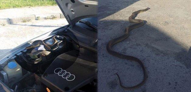Otomobilin motor kısmından yaklaşık 3 metre yılan çıktı!