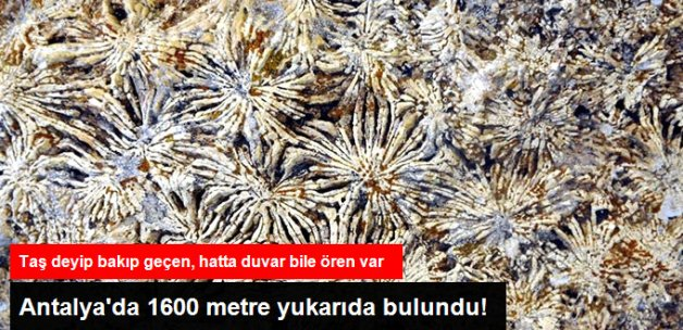 Antalya'da 15 Milyon Yıllık Deniz Canlısı Fosilleri Bulundu!