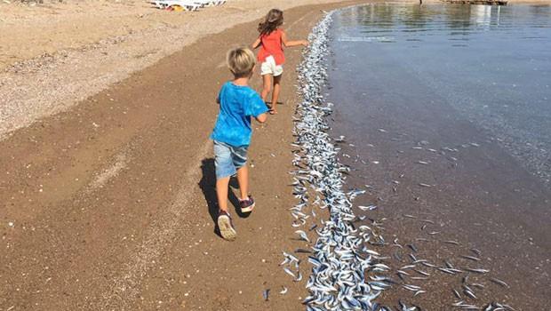 Bozcaada sahiline yüzlerce ölü balık vurdu