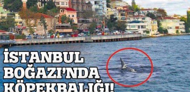 İstanbul Boğazı'nda köpekbalığı!