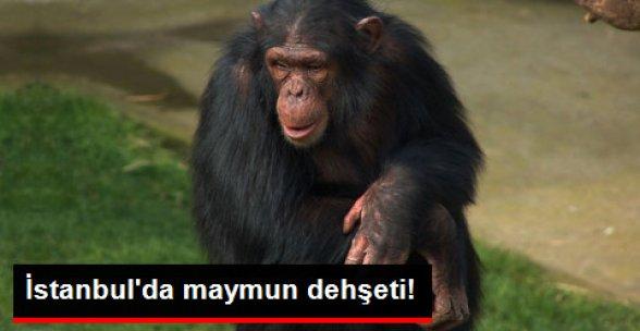 İstanbul'da Maymun Parktaki Çocuğa Saldırdı