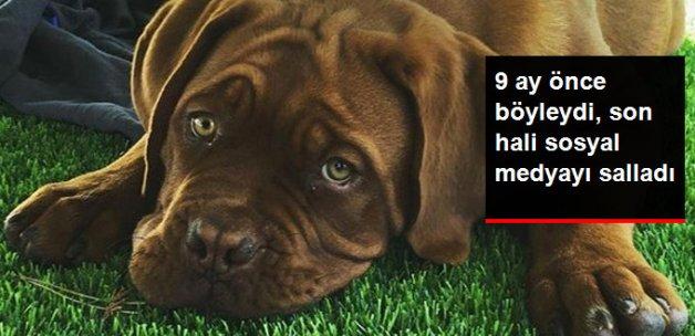 Messi'nin Köpeği, 9 Ayda Devasa Boyuta Ulaştı