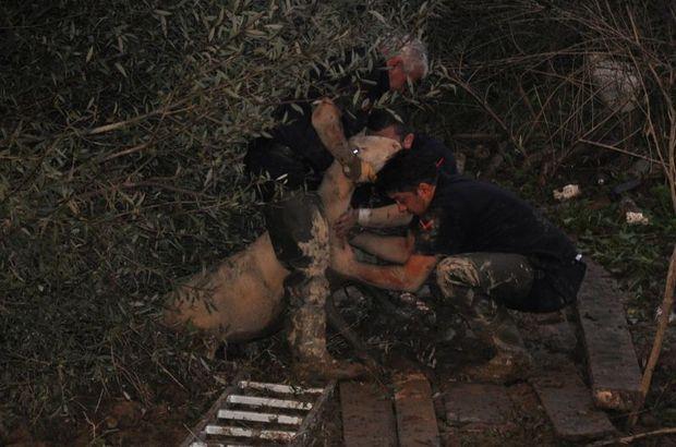Bataklığa saplanan 50 küçükbaş hayvanı itfaiye kurtardı