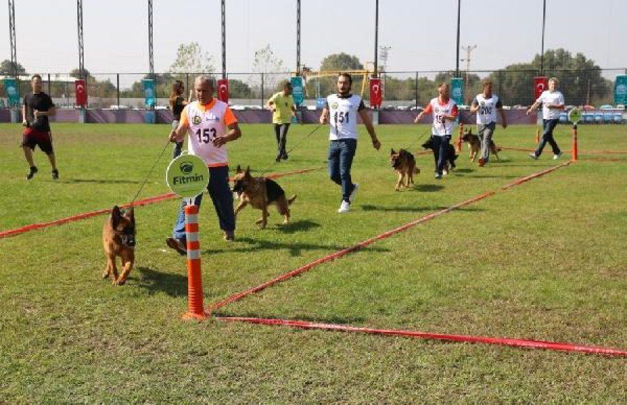 Bursa'da Alman çoban köpekleri, sokak hayvanları için yarıştırıldı