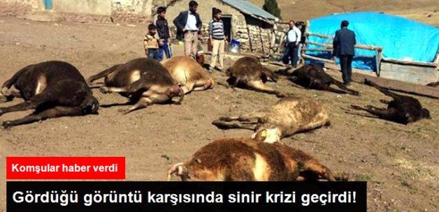 Erzurum'da Ahırda Yangın Çıktı! 9 İnekten 8'i Telef Oldu