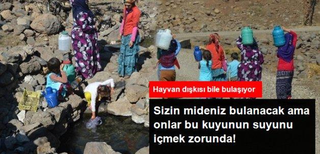 Köylüler Hayvan Dışkılarının Bulaştığı Kuyu Suyunu Mecburiyetten İçiyor