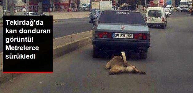Tekirdağ'da Köpeğe Yapılan İşkence Kan Dondurdu