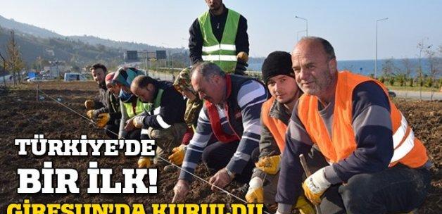 Türkiye'nin ilk 'ısırgan tarlası' Giresun'da kuruldu